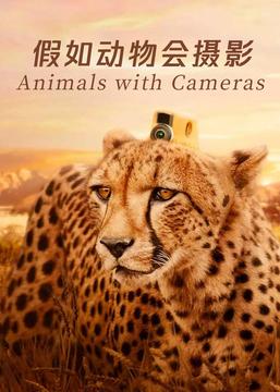 假如动物会摄影高清海报