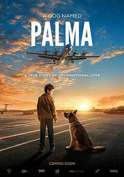 忠犬帕尔玛高清海报